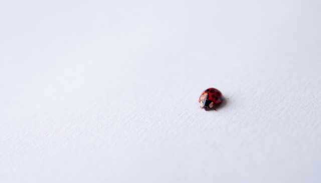 red ladybug on white surface